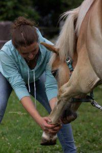 Behandlung Pferd