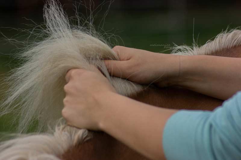 Massage Mähnenkamm