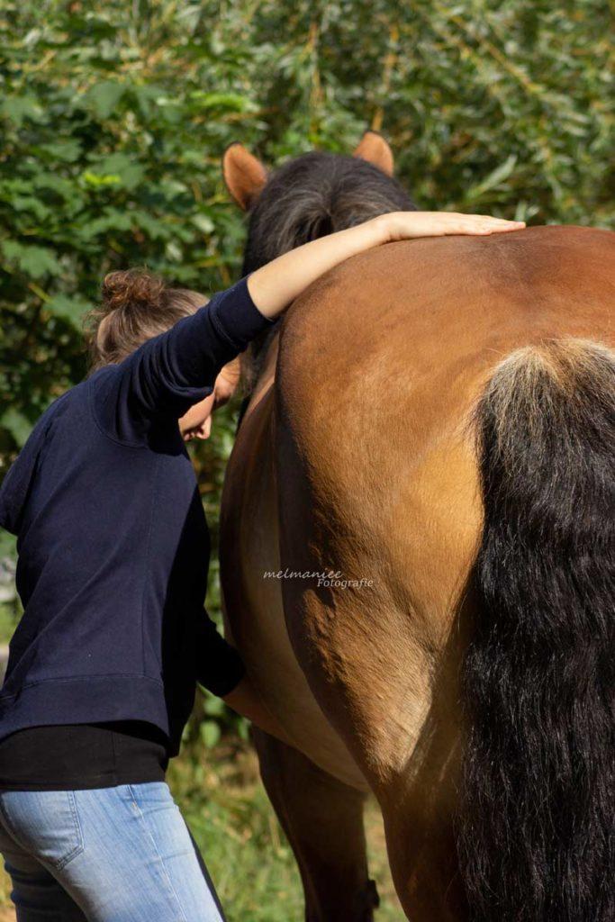 Behandlung Pferdeosteopathie