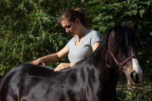 Palpation Pony